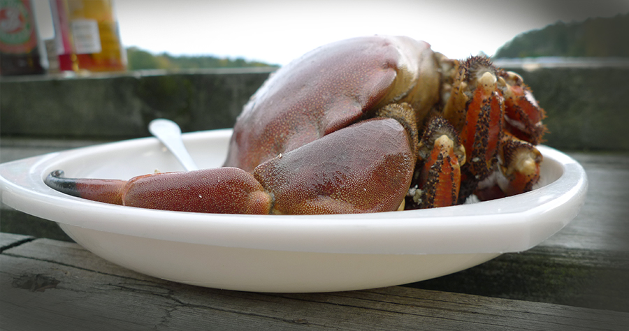 krabba pa bryggan