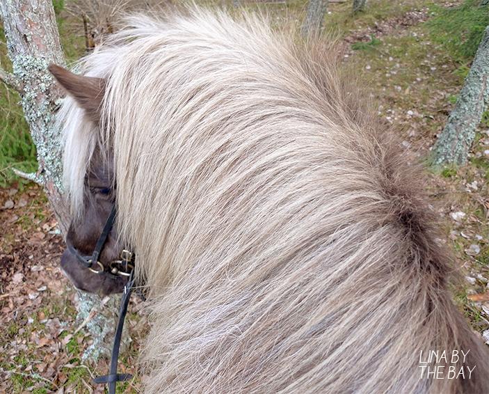 horses_8