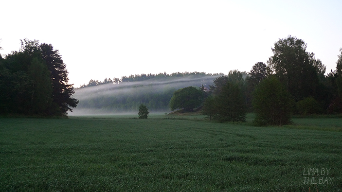 spring_ramsdalen_meadow