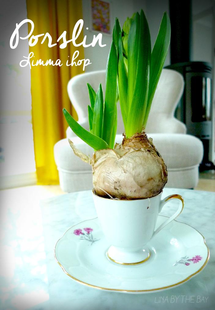 Hyacint i  kopp av linabythebay