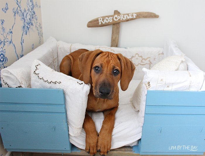 Hundsang 0 Linabythebay