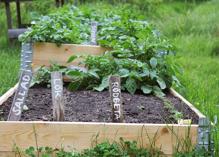 Garden 1 Linabythebay
